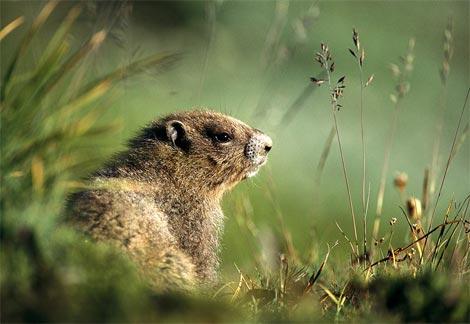 groundhog2-742893